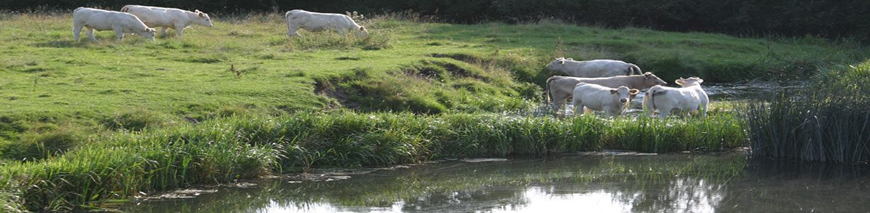 Saxån – Braåns Vattenråd